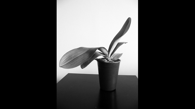 Black and White Plant